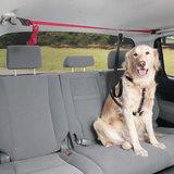 Pets auto veiligheidslijn met riem_